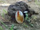 Batu Mustika Pelet Pemikat Sukma