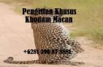 Pengisian Khusus Khodam Macan